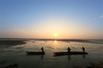 清晨,太白湖畔的朝霞美得波澜不惊,勤劳的挖藕人撑着小船,向湖中心划